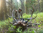 Backcountry Whopper Bull