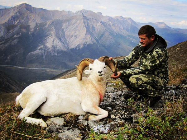 Sweet Dall Sheep for Brent