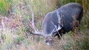 10 Days of Colorado Hunting - Founder's Webcast