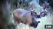 12x9 Monster Muley - Founder's Webcast