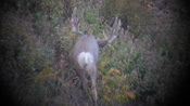 2015 Wyoming Monster Muley Hunt - Founder's Webcast