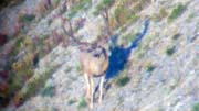 Best Buck of the Year - Founder's Webcast