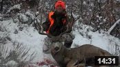 Big Buck Down! - Founder's Webcast