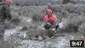 Big Buck for Adam