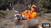 Bud's 30-Inch Wide Colorado Buck