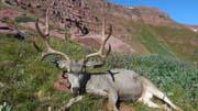 Colorado 4x5 Trophy Buck Score - Founder's Webcast