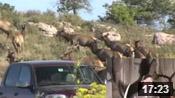 Colorado Elk Hunting - HOTW #31