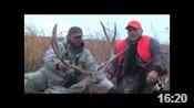 Eastern Colorado Mule Deer - HOTW #38