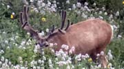 High Country Bucks - Founder's Webcast