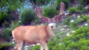 High Country Muleys 2017 - Founder's Webcast