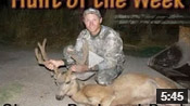 Bull Elk - HOTW #4