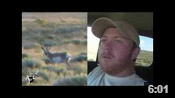 Huge Colorado Antelope - HOTW #39