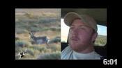 Huge Colorado Antelope - HOTW #39