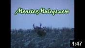 Huge Utah Buck