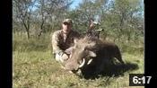 Kregg's African Warthog - HOTW #19