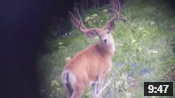 Monster Muley Found! - Founder's Webcast