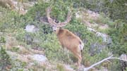 More High Country Bucks - Founder's Webcast