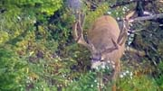 More High Country Muleys - Founder's Webcast