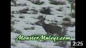 And Even More Winter Range Bucks