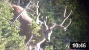 More Wyoming Bucks - Founder's Webcast