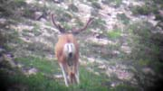 Muley Scouting Trip #1 for 2017 - Founder's Webcast
