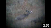 Paul's Wyoming Muley