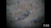 Paul's Wyoming Muley
