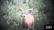 Pretty Good Bucks I Saw