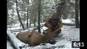 Recurve Elk Hunt Success - HOTW #18
