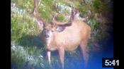 Some Nice Wyoming Bucks - Founder's Webcast
