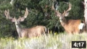 Two Wide Bucks!!