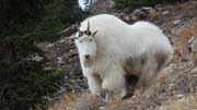 Goat Hunting Adventure - Founder's Webcast
