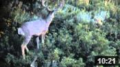 Utah Archery Hunt Opener - Founder's Webcast