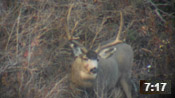 Utah Late-Season Archery Hunt 2014 - Founder's Webcast