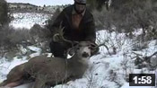 Very Unique, Cool Droptine Muley