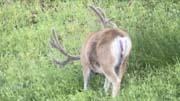 Wide Kicker Buck - Founder's Webcast
