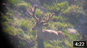 Wide Wyoming 5x3 Buck, Plus More - Founder's Webcast