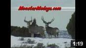 Winter Bucks and Bulls