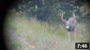 Wyoming Archery Mule Deer Hunt - Founder's Webcast