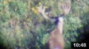 Wyoming Archery Opener 2014 - Big Buck Found! - Founder's Webcast
