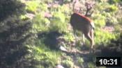 Wyoming Deer Scouting - Founder's Webcast