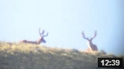 Wyoming Deer Scouting - Founder's Webcast