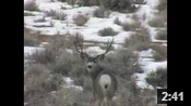 Wyoming Winter Range Bucks