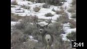 Wyoming Winter Range Bucks