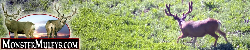 Mule Deer, Elk and Western Big Game Hunting - MonsterMuleys.com