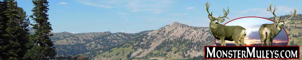 Coues Whitetail Deer Forum - MonsterMuleys.com