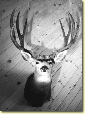 Lee's Meat Buck